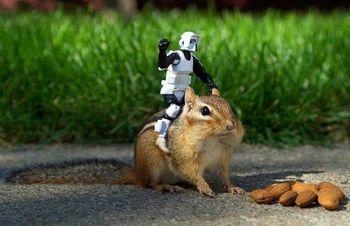 Storm-trooper-on-c_1425263i
