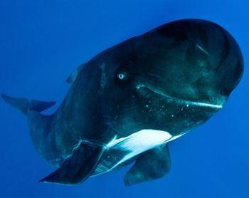 Pilot-whale-photographer