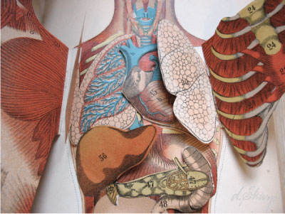 arteries and veins of neck. the arteries and veins and